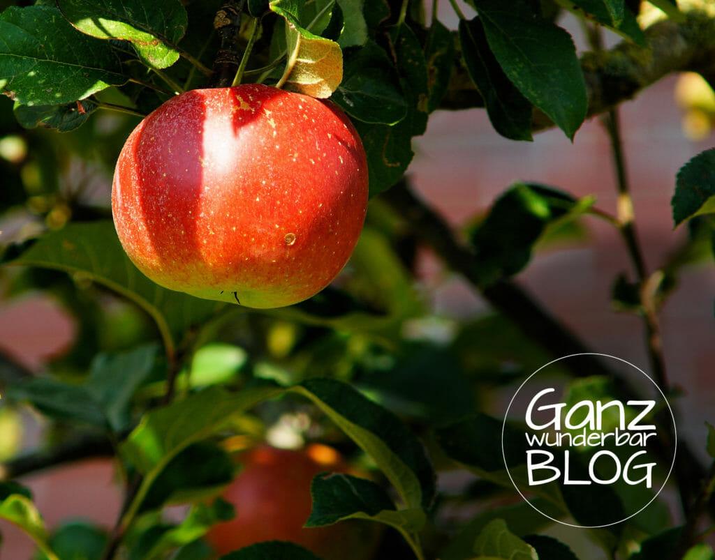 apple-tree-429213