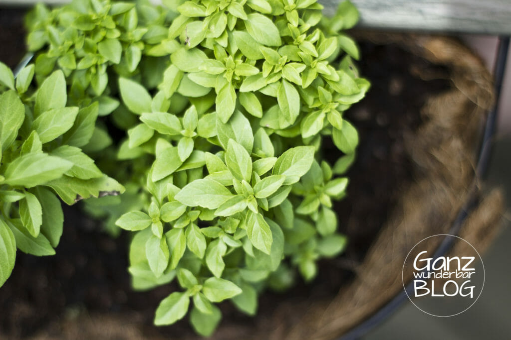 herbs-702546
