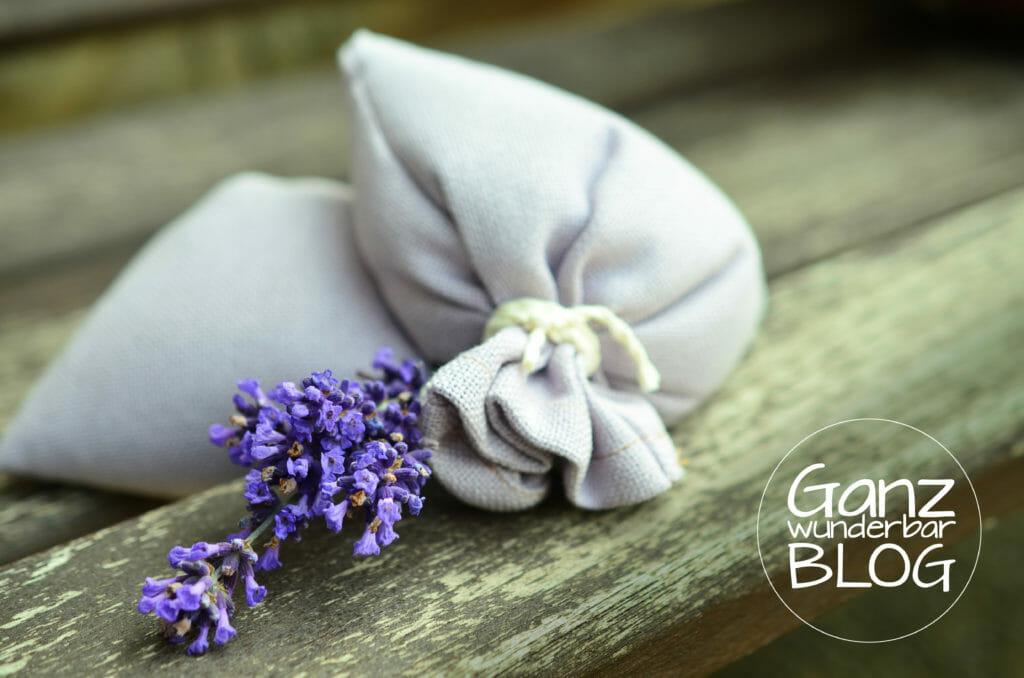 lavender-823584