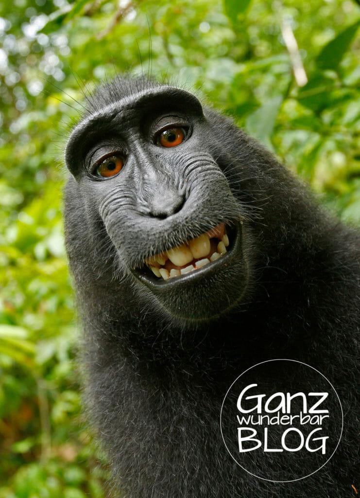 selfie-413162