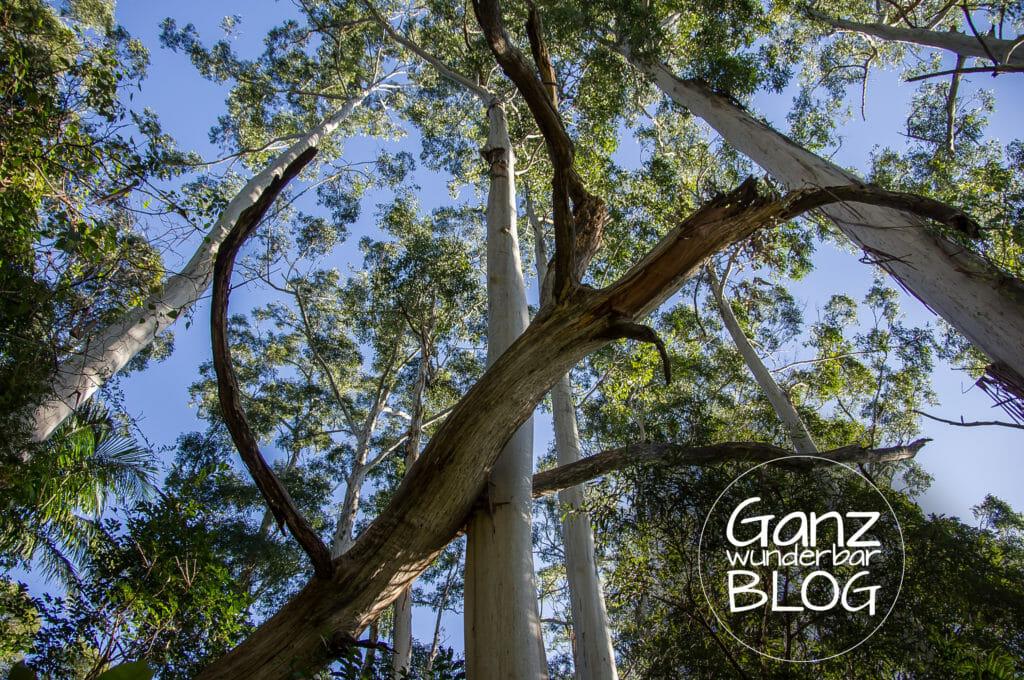 trees-786618