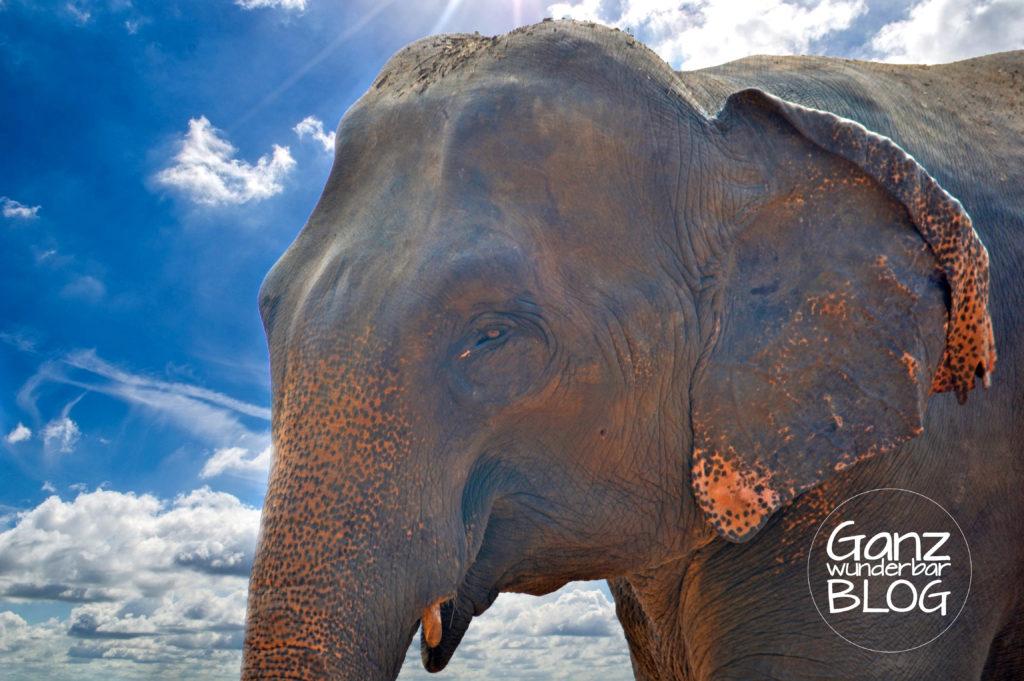 elephant-264728_2