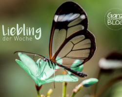Elegante, transparente Yogapants – Liebling der Woche