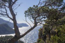 Mallorca Tipps · Die schönsten Yoga Urlaube auf Mallorca · Blogparade
