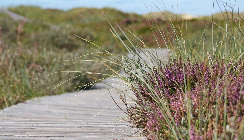 Yogaurlaub an der Nordsee