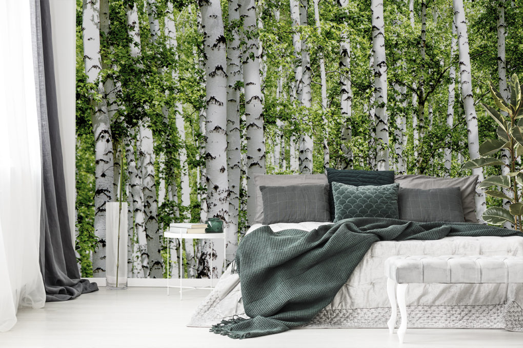 Fototapete Birkenwald im Schlafzimmer
