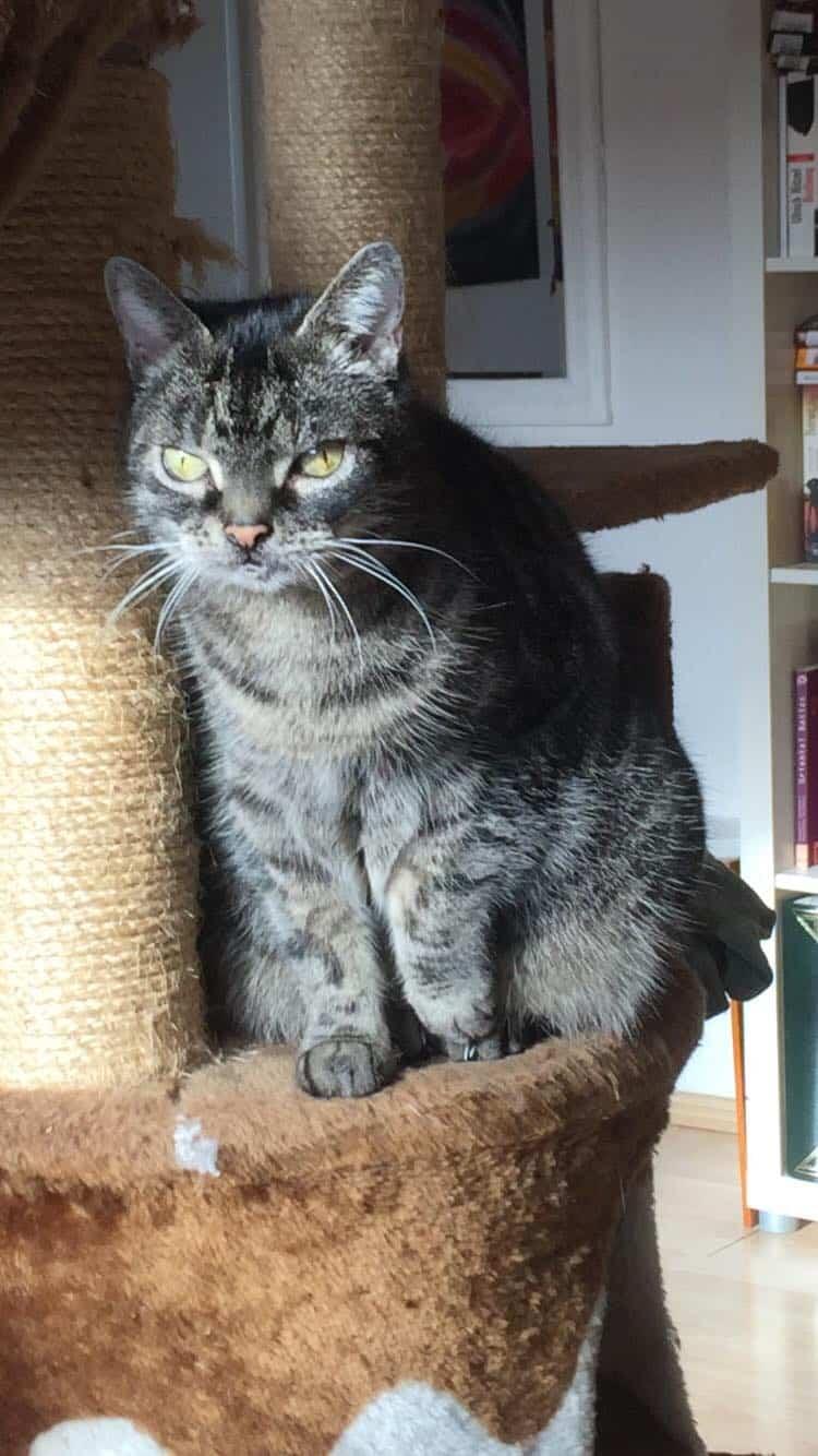 Katze verstorben an einer Thrombose