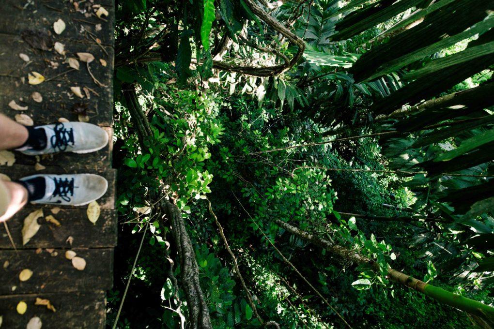 Lianen im peruanischen Dschungel