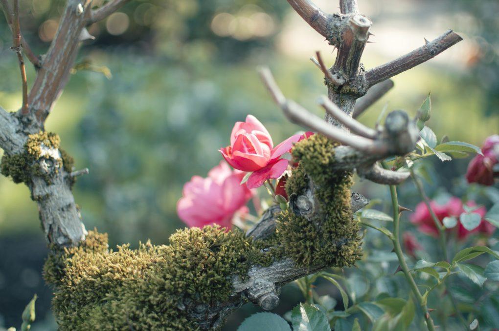 Blumen im Zen Garten