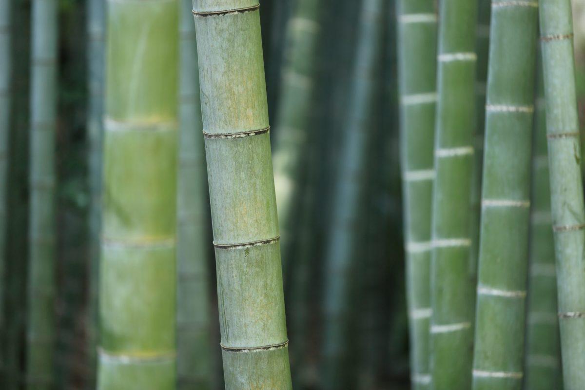 Die Vorteile von Bambus
